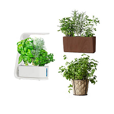 Plants.com Herb Plants delivery service